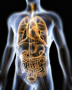 How to maintain good digestive health